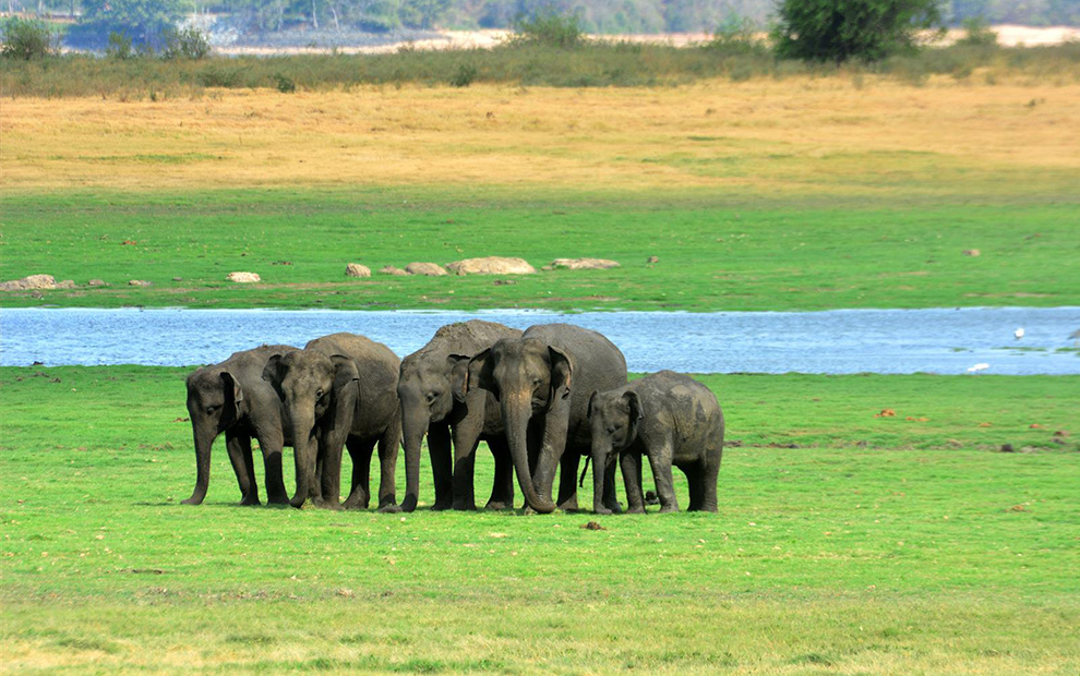 Explore Sri Lanka's Wildlife – A haven for wildlife enthusiasts!