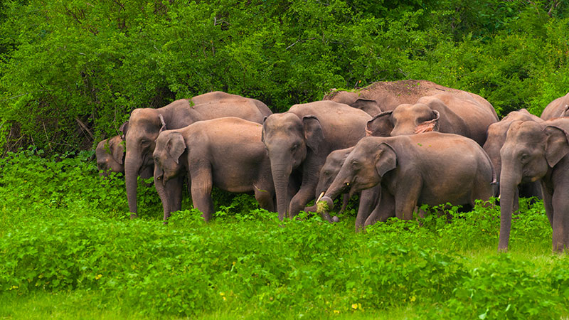 elephant-gathering-header-desktop